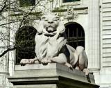 305 297 7 NY Library 5.2013.jpg