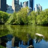 395 406 Central Park pond 4.2013 2.jpg