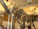 441 471 9 museum of natura history.jpg