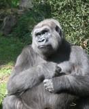 531 801 8 Bronx Zoo.jpg