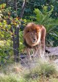 532 801 19 Bronx Zoo.jpg