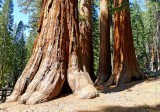 752 2 Yosemite Mariposa Grove Bachelor and Three Graces.jpg