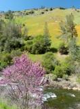 783 3 Merced River El Portal.jpg