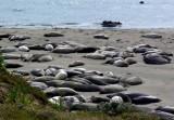 165 Piedras Blancas Elephant Seal Rookery Pacific Coast Highway.jpg