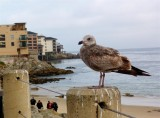 319 Monterey.jpg