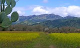 654 1 Napa Valley.jpg