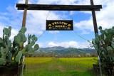 654 2 Napa Valley.jpg