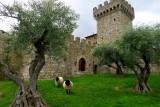 668 2 Castello di Amorosa.jpg