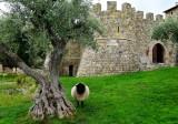 668 4 Castello di Amorosa.jpg
