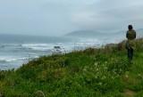 834 Mendocino coast 2014.jpg