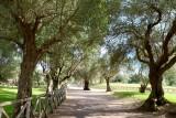 999 1264 Villa Adriana 2014.jpg