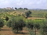 570 Tuscan countryside 17jpg.jpg