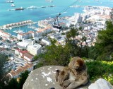 1614 Gibraltar monkeys.JPG