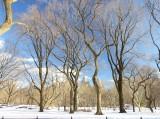 422 8 Central Park snow 2016 5.jpg