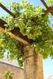 621 Monastary of Arkadi Crete 20.jpg