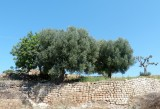 420 near Cisternino.jpg
