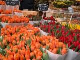 210 Bloemenmarkt 2004 1, Amsterdam.jpg
