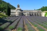 599 Luberon Abbaye de Senanque  356.jpg