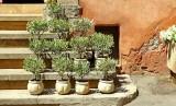 630 Luberon Roussillon 058.jpg