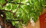 633 Luberon Roussillon 104.jpg