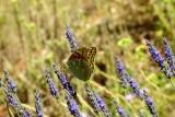 635 Luberon Roussillon 073.jpg