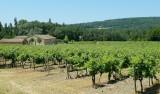 670 Luberon Vineyard 140.jpg