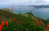403 2 Golden Gate Bridge.jpg