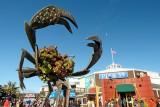 431 Pier 39 SF 2014 1.jpg