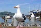 433 5 Pier 39 SF 2014.jpg