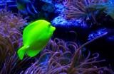 444 Aquarium Pier 39 SF 2014 6.jpg