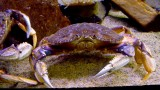 444 Aquarium Pier 39 SF 2014 8.jpg