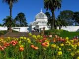553 1 Golden Gate Park SF 2014.jpg