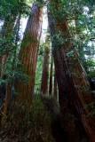 582 2 Muir Woods.jpg
