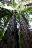 582 4 Muir Woods.jpg