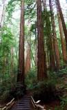 583 4 Muir Woods.jpg
