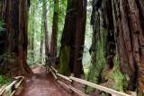 583 6 Muir Woods.jpg