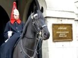 377 Royal Mews Whitehall St.jpg