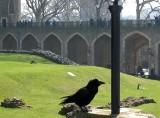674 Tower of London.jpg