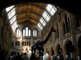 810 Natural History Museum.jpg