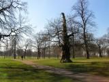 841 Hyde Park.JPG
