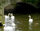 461 Minnewater Brugge.jpg