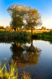 Trees, Water And Sunshine