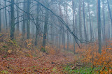 In The Beech Woods