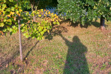 My Shadow Under The Trees
