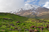 Mt. Damavand And The Sheep