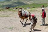 Bringing The Mules
