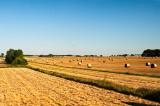 Landscape After Harvest