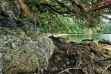 Field Trip: Gowlland Tod Park