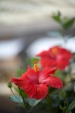 Red @f1.4 5D