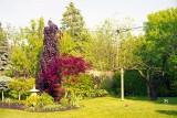 Backyard Reala